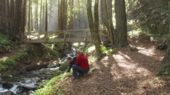 Time lapse of a family walking in the forest at Limekiln State Park in Big Sur Stock Footage