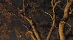 Night time lapse of startrails through an oak tree in Oak View, California. Stock Footage