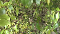 Feeding Hummingbird babies -06 Stock Footage