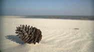 Pine Cone on the beach Stock Footage
