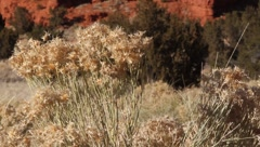 Red Rock  0980 Stock Footage