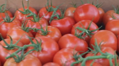Tomato harvest from aeroponically grown tomatoes - 1 Stock Footage
