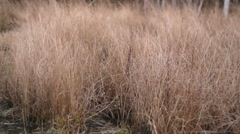 Grasses 03 - windy autumn day Stock Footage