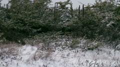 Tree Slider 02 - stock footage
