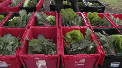 Lettuce being added to a community supported agriculture box in Ojai Stock Footage