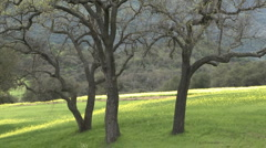 Zoom out on green pasture with Valley and Live Oaks during the spring in Ojai Stock Footage