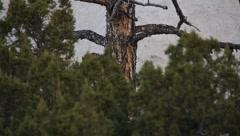 Southwestern Tree 1254 - stock footage