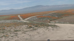 Point of view driving through california poppies in bloom Stock Footage