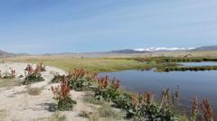 Mountain Lake Dayan Nuur  Stock Footage