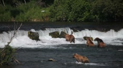 Adult Grizzlies at falls looking for fish-8 - stock footage