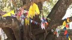 Bodhi-tree in Anuradhapura, Sri Lanka Stock Footage