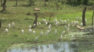 Stock Video Footage of Birds near the water