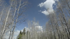 Time lapse of clouds passing over aspens trees in Hopewell Lake, New Mexico. Stock Footage