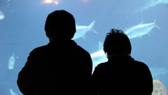Aquarium 1435 Stock Footage