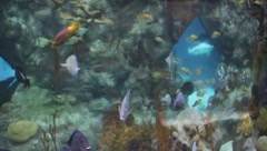 Aquarium 1406 - stock footage