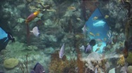 Stock Video Footage of Aquarium 1406