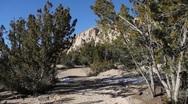 Trail Walking POV 1156 Stock Footage