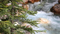 Tokkum Creek and Pine Tree, stock footage Stock Footage