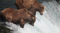 Adult Grizzlies at falls looking for fish -16 Stock Footage