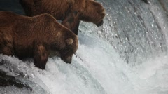 Adult Grizzlies at falls looking for fish -17 (salmon jumping) Stock Footage