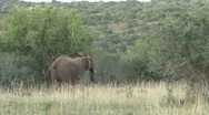 Elephant running Stock Footage
