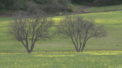 Zoom out on large trees and field of flowers during the spring in Ojai Stock Footage