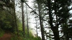 Rain forest fog 2 Stock Footage