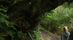 Rain forest hikers Stock Footage