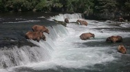 Adult Grizzlies at falls looking for fish -32 Stock Footage