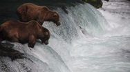 Adult Grizzlies at falls looking for fish -34 Stock Footage