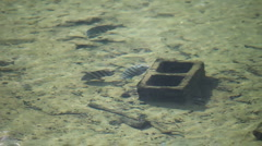 Fish At Homosassa Springs, Florida Stock Footage