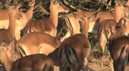 Group of deers Stock Footage