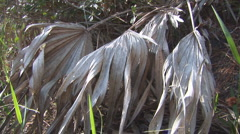 Palmetto Dead Stock Footage