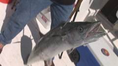 King Mackeral Fishing Stock Footage