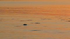 MVI 9289 ocean glow pop out ducks Stock Footage
