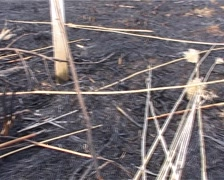 Scorched Ground - stock footage