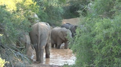 Group elephants in a waterpool Stock Footage