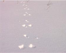 freshly fallen snow - stock footage
