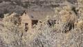 Southwestern Adobe Home HD Footage