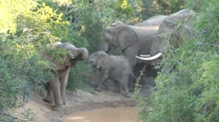 Group elephants at a waterpool Stock Footage