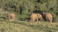 Elephants South Africa Wildlife Stock Footage