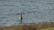 Angler walking in Rutland Water. Stock Footage