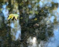 Floating Fallen Leaf Stock Footage