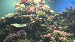 Colourful coral reef and tropical fish Stock Footage