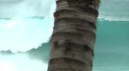Pipeline Barrel Behind Coconut Tree Stock Footage