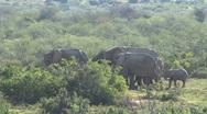 Group elephants Stock Footage