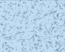 Microbes form Yin-Yang PAL Stock Footage