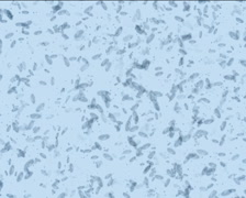 Microbes form Euro PAL Stock Footage