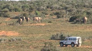 Elephants safari South Africa  Stock Footage