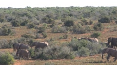 Big group Elephants passing by - stock footage